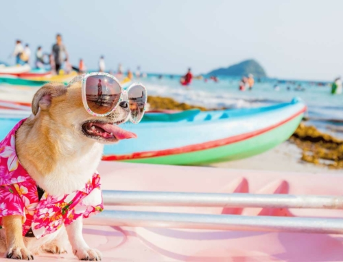 Delicacies for the Dog Days of Summer